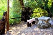 Zakintos (Zante), Graikija