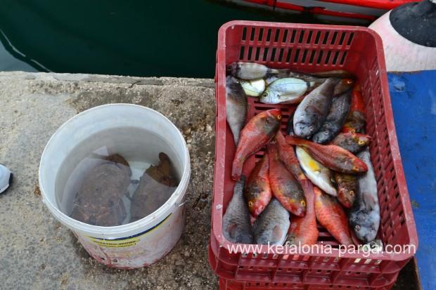 Argostoli for Bud s fish market