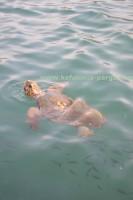 Черепахи Карета Карета