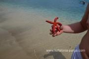Jūros gražuolė