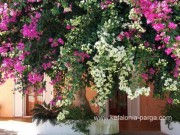 Kefalonia hotels: studios, apartments Lassi by the Makris Gialos beach. Greece vacations