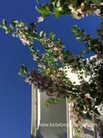 Poilsis Graikijoje. Kefalonija viešbučiai prie jūros